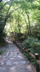 緑のトンネルから漏れる日の光(滝道左岸)