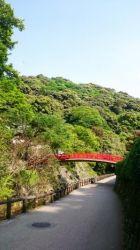 赤い橋と緑のもみじの見事なコントラスト