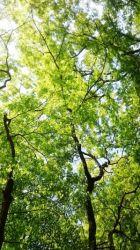 こちらは木漏れ日による緑のグラデーション