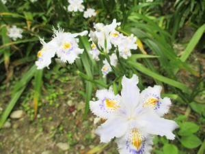 下にも注目!足下にはきれいな花が