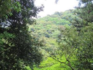 ひとえに緑といってもたくさんの緑が・・・